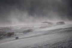 Free Snowstorm Royalty Free Stock Photo - 50941745