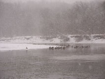 Snowstorm along the Kishwaukee Stock Photos