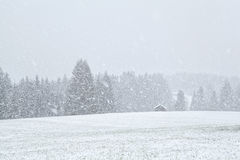 Snowstorm in Bavariah meadows Stock Photography