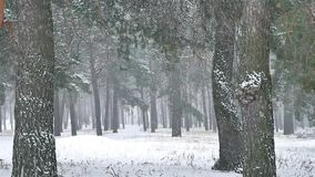 Snowstorm blizzard the woods snowing winter, christmas nature tree and pine forest landscape. Snowstorm blizzard woods snowing winter, christmas nature tree and stock video