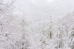 Snowstorm in Chattahoochee National Forest. CHATTAHOOCHEE NATIONAL FOREST, GEORGIA USA-FEBRUARY 24:Effect of snow storm in the Chattahoochee National Forest stock photography