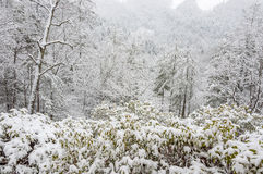Snowstorm in Chattahoochee National Forest. CHATTAHOOCHEE NATIONAL FOREST, GEORGIA USA-FEBRUARY 24:Effect of snow storm in the Chattahoochee National Forest royalty free stock image