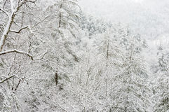 Snowstorm in Chattahoochee National Forest. CHATTAHOOCHEE NATIONAL FOREST, GEORGIA USA-FEBRUARY 24:Effect of snow storm in the Chattahoochee National Forest stock image