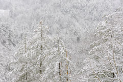 Snowstorm in Chattahoochee National Forest. CHATTAHOOCHEE NATIONAL FOREST, GEORGIA USA-FEBRUARY 24:Effect of snow storm in the Chattahoochee National Forest stock photos