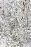 Snowstorm in Chattahoochee National Forest. CHATTAHOOCHEE NATIONAL FOREST, GEORGIA USA-FEBRUARY 24:Effect of snow storm in the Chattahoochee National Forest royalty free stock photo