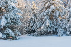 Snowstorm in the Chattahoochee National Forest. Snow and ice covered trees after winter storm in southern appalachia royalty free stock photos