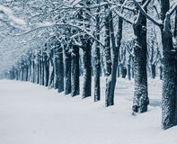Snowstorm. In city park, christmas background Stock Photography