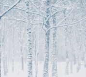 Snowstorm. In city park, christmas background Stock Image
