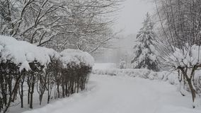 Snowstorm in empty city park stock video footage