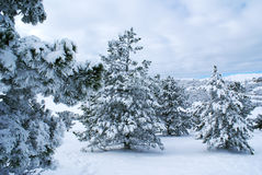 After snowstorm f Royalty Free Stock Image