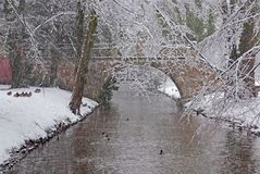 Snowstorm In The Park. Royalty Free Stock Images