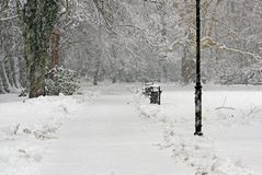 Snowstorm In The Park. Stock Image