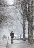 Snowstorm man park Stock Photography
