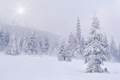Snowstorm in the mountains Stock Photos