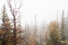 Snowstorm in the Mountains. It's snowing in the mountains of Colorado Royalty Free Stock Photo
