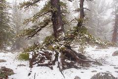 Snowstorm in the Mountains. It's snowing in the mountains of Colorado Stock Photography
