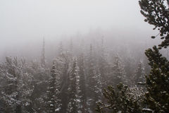 Snowstorm in the Mountains. It's snowing in the mountains of Colorado Royalty Free Stock Images