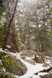 Snowstorm in the Mountains. It's snowing in the mountains of Colorado Royalty Free Stock Photos