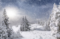 Snowstorm in the mountains royalty free stock photos