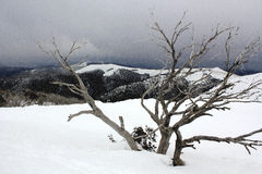 A snowstorm on a mountainside in Australia Royalty Free Stock Image