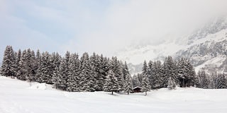 Snowstorm. Panoramic photo of a forest in the mountains covered with snow on a snowstorm. Swiss Alps royalty free stock photo