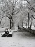 Snowstorm in park in Montreal. Girl walks her dogs during a snowstorm in Parc Lafontaine in Montreal Royalty Free Stock Image
