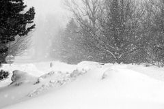 Snowstorm in Quebec. Black and white image depicting a snowstorm with snowfall and snow accumulation Stock Image
