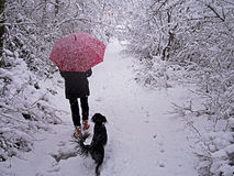 Woman with dog in snow landscaspe - winter scene Royalty Free Stock Photo
