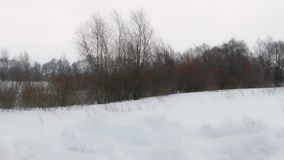 Snowstorm in winter field. Snowstorm in a winter field with a bush in the background stock video footage