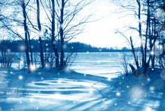 Snowstorm in winter forest Royalty Free Stock Photography