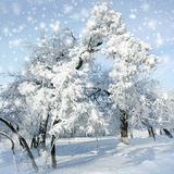 Snowstorm in winter park Stock Photo