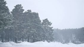 Snowstorm the woods blizzard snowing winter, christmas nature tree and pine forest landscape. Snowstorm woods blizzard snowing winter, christmas nature tree and stock video