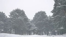 Snowstorm the woods snowing blizzard winter, christmas nature tree and pine forest landscape. Snowstorm woods snowing blizzard winter, christmas nature tree and stock footage