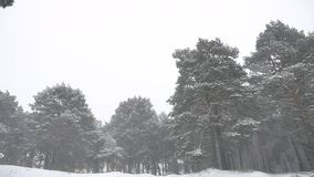 Snowstorm the woods snowing nature blizzard winter, christmas tree and pine forest landscape. Snowstorm woods snowing nature blizzard winter, christmas tree and stock video footage