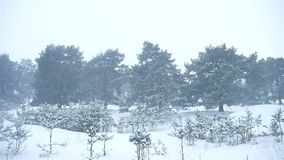 Snowstorm the woods snowing winter blizzard, christmas nature tree and pine forest landscape. Snowstorm woods snowing winter blizzard, christmas nature tree and stock video