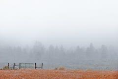 Insnöat landskap med trees Arkivfoto