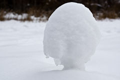 Snowsvamp Royaltyfri Foto
