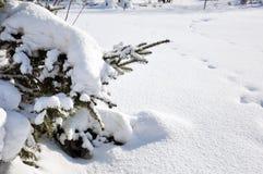 snowtraces Royaltyfri Fotografi