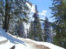 Snowtrail i fjällängar Arkivfoto