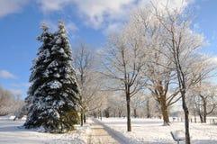 snowtrailvinter Arkivbilder