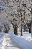 snowtrailvinter Royaltyfri Foto