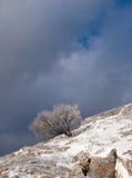 snowtree Arkivfoto