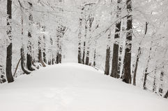 snowtree för 2 berg Arkivfoto