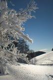 snowtrees Royaltyfri Fotografi