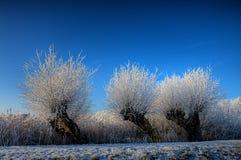 snowtrees Arkivfoton