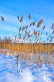 snowtripod Arkivfoto