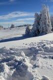 snowvinter Fotografering för Bildbyråer