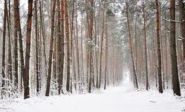 snowvinterträ Royaltyfri Fotografi