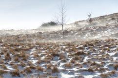 snowwind Fotografering för Bildbyråer