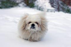 Snowy Fotografie Stock Libere da Diritti